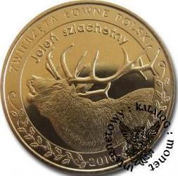 1 nemrod - Jeleń szlachetny (golden nordic)