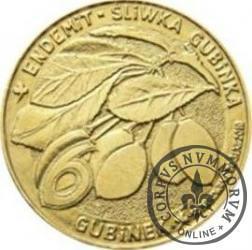 6 gubinek - Gubin