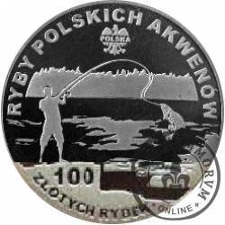 100 złotych rybek (Ag) - XIX emisja / TOŁPYGA BIAŁA