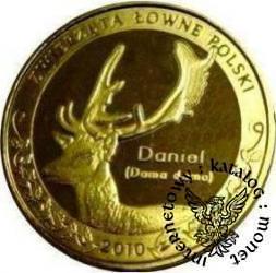 1 nemrod - Daniel (golden nordic)