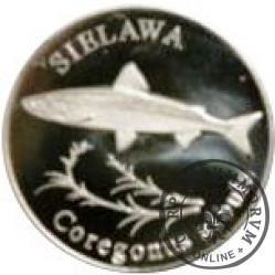10 złotych rybek (alpaka) - XLVI emisja / SIELAWA