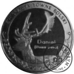 1 nemrod - Daniel (alpaka)