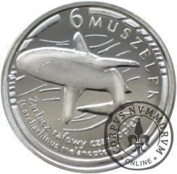 6 muszelek - Żarłacz rafowy czarnopłetwy